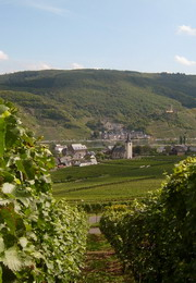 Vineyard with view on Ellenz, the Mosel and Beilstein